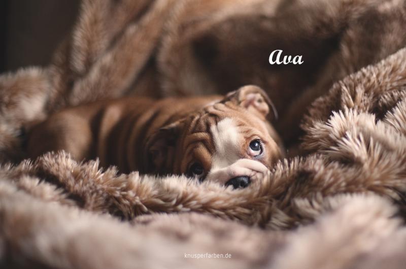 Ava_1000_02