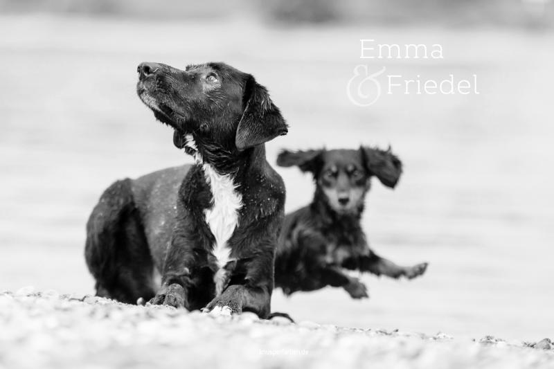Emma_Friedel