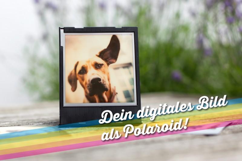 Pola_Angebote_1000_02