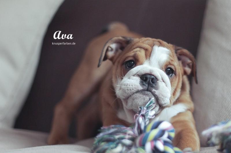 Ava_1000_11